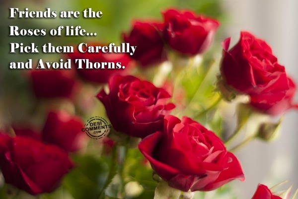 Friends are the roses of life...