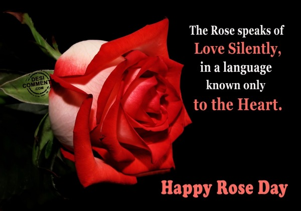 Happy Rose Day - The rose speaks of love silently...