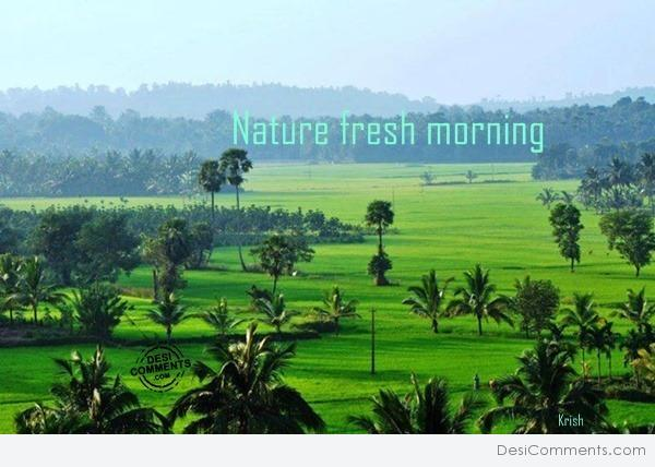 Nature fresh morning