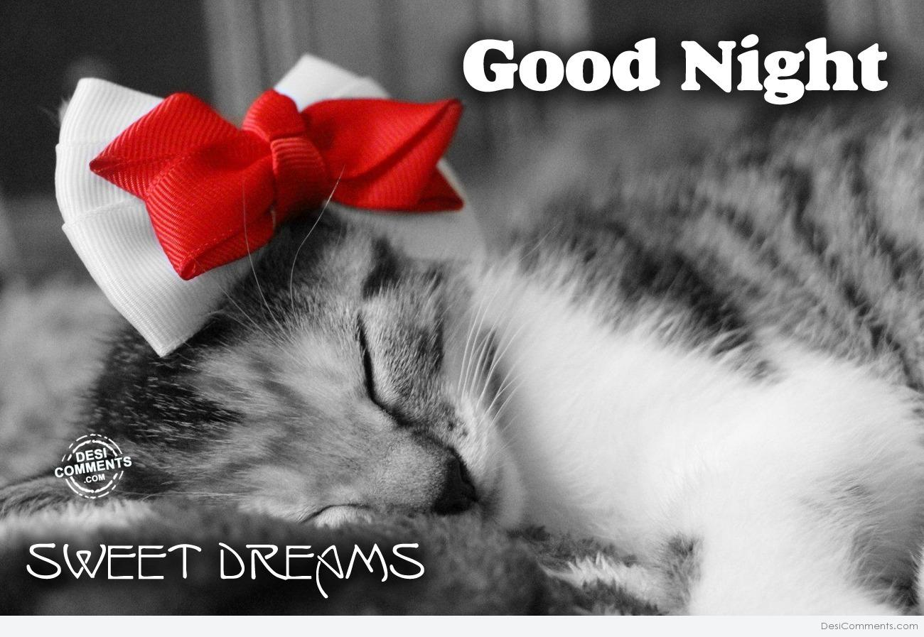 Good Night cat - DesiComments.com