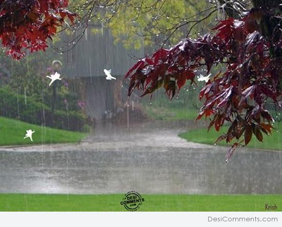 Beauty of rain
