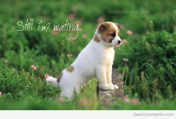 Still I'm Waiting