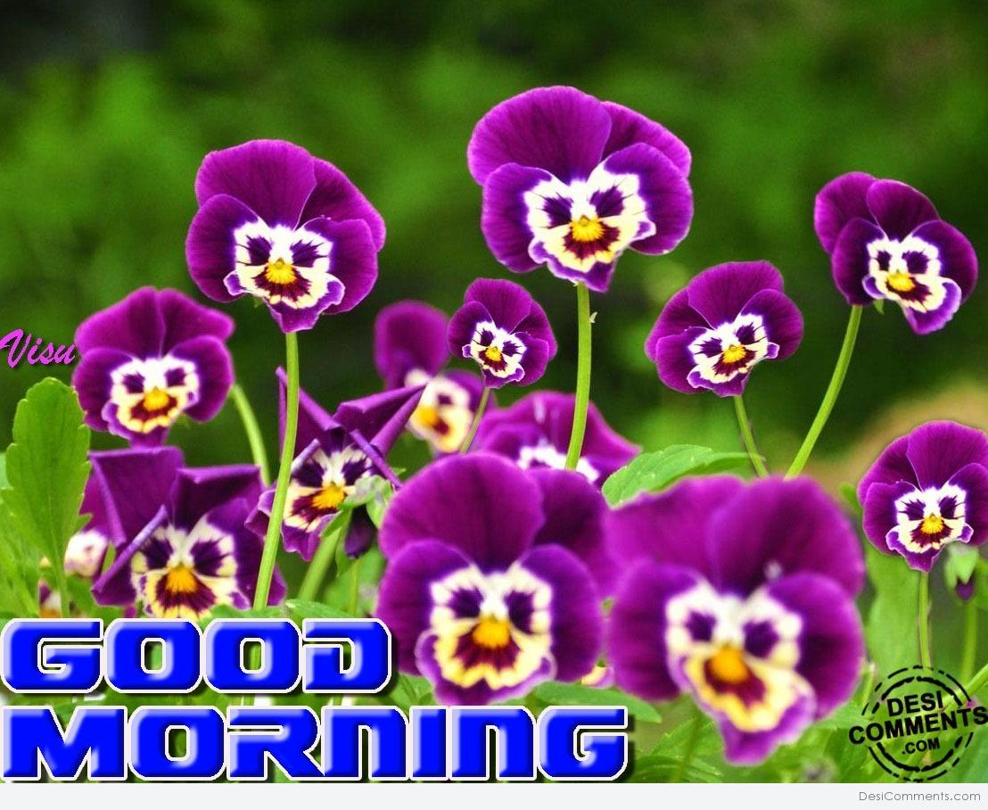 Good Morning With Purple Flowers Desicomments Com