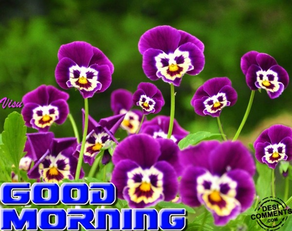 Good Morning With Purple Flowers - DesiComments.com