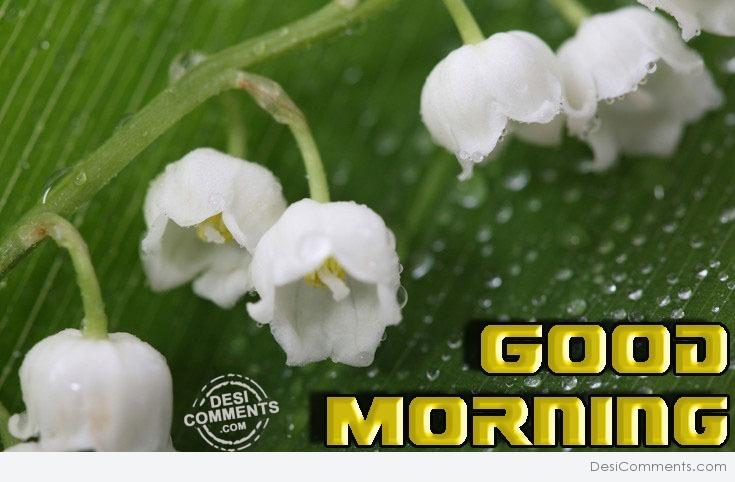 Good morning with white flowers desicomments good morning with white flowers mightylinksfo