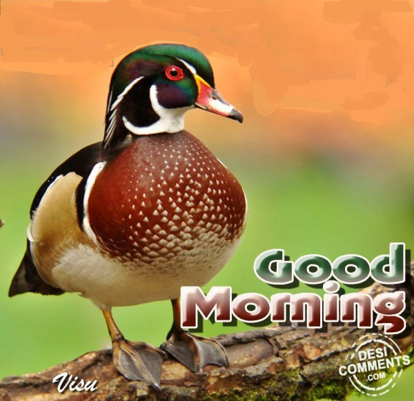 Pic Of Good Morning
