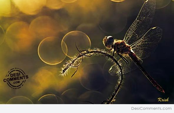 Picture: Dragon Fly