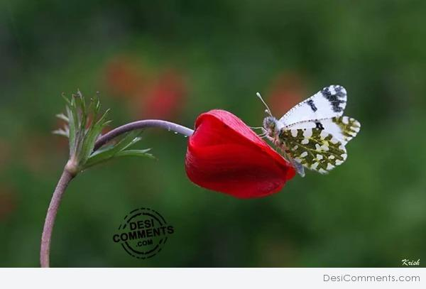 Bud and Butterfly