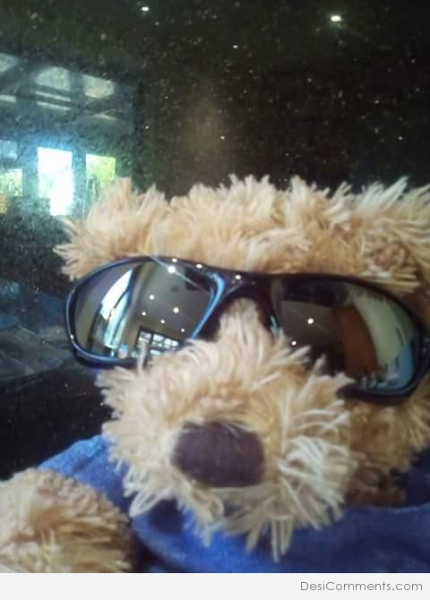 cool teddy bear in sunglasses