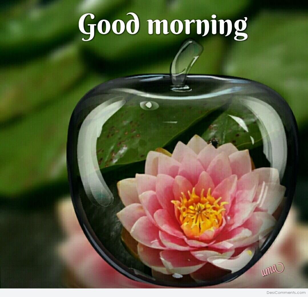 Search results for good morning image with shayari for Good comments on pic