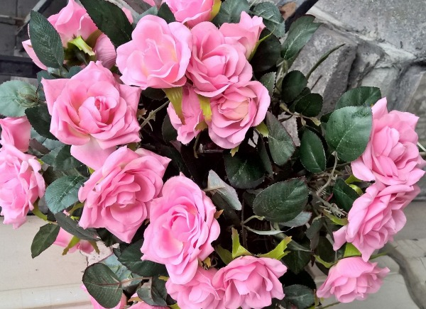 Picture: Pink Rose