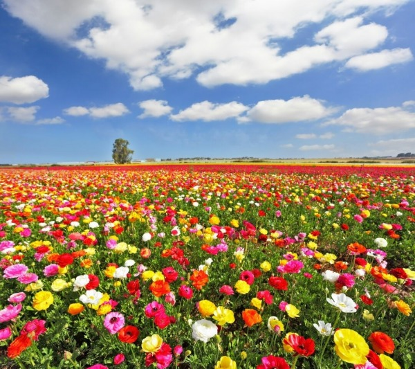 Picture: Flowers