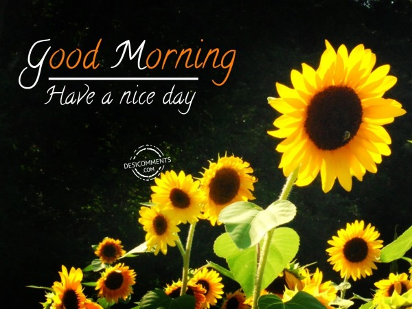 Image Of Good Morning - Have A Nice Day