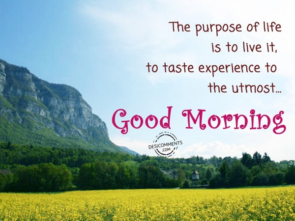 The Purpose Of Life - Good Morning