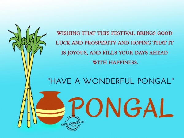 Wishing that this festival brings joy - Happy Pongal