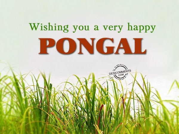 Wishing you a very Happy Pongal