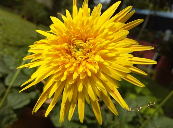 Picture: Yellow Flower