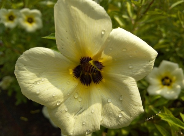 Picture: White Flower