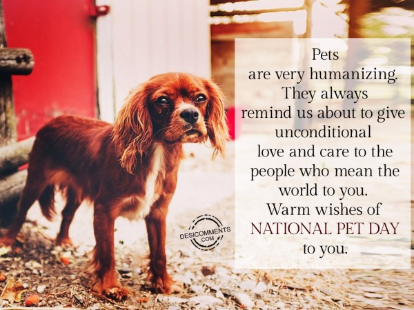 Love Your Pet Day Pictures, Images, Graphics