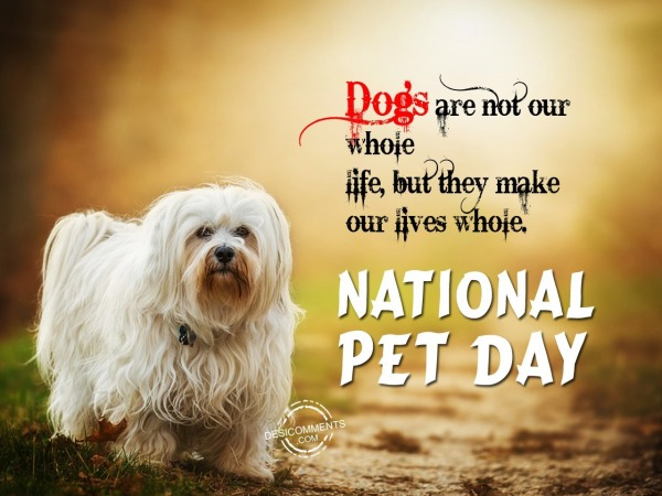 Dogs are not our whole, National Pet Day