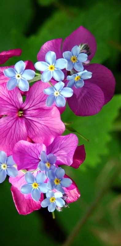Picture: Beautiful Flowers