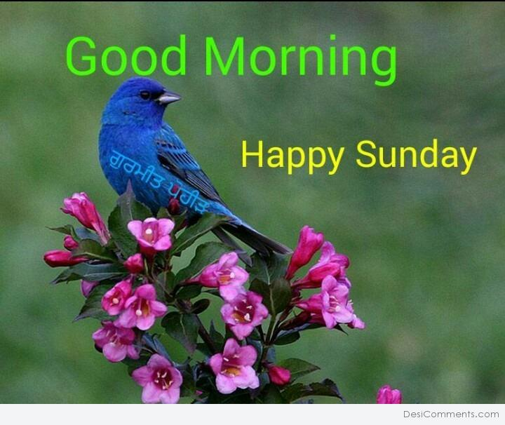 Good Morning Happy Sunday Desicommentscom