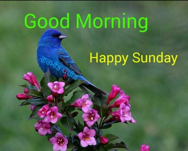 Good Morning - Happy Sunday