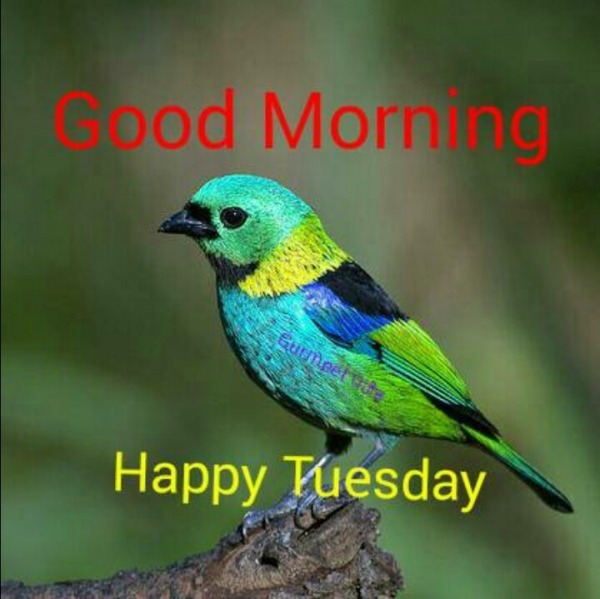 Good Morning - Happy Tuesday