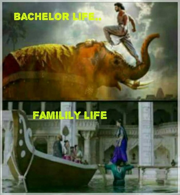 Bachelor Life Vs Family Life