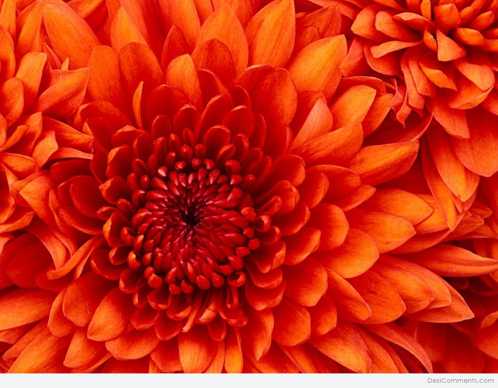 flowers pictures images graphics for facebook whatsapp