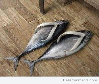 Picture: Fish Chappal