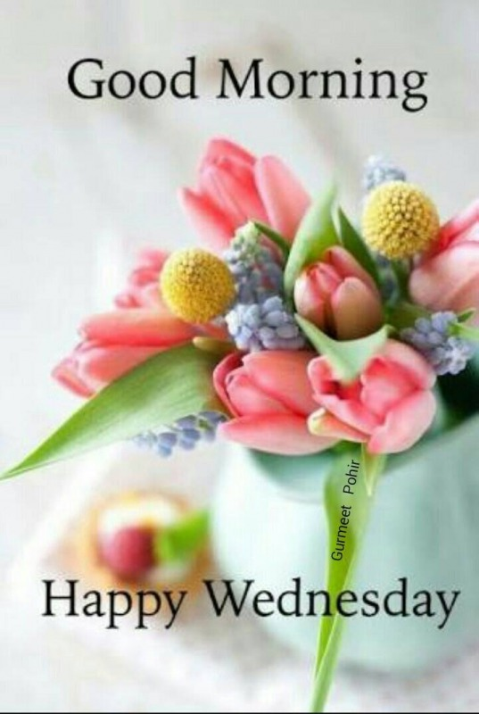 Happy Wednesday - Good Morning