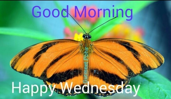 Good Morning - Happy Wednesday