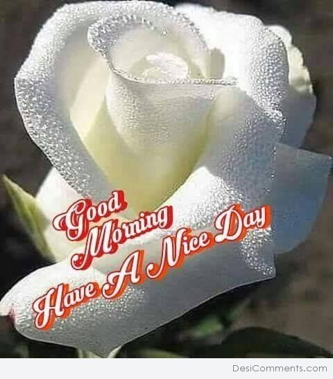 Image Of Good Morning Have A Nice Day