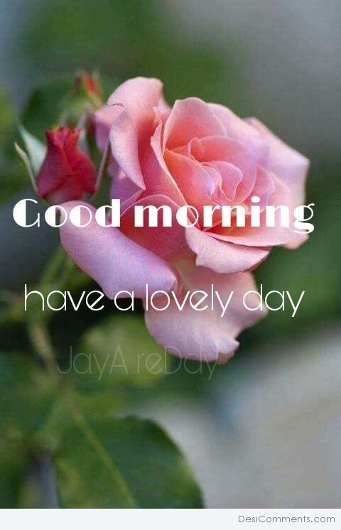 Good Morning Have A Lovely Day