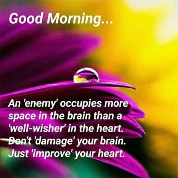 JUST IMPROVE YOUR HEART GOOD MORNING