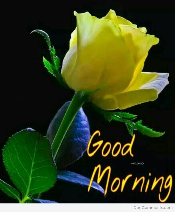 Good morning with yellow rose desicomments good morning with yellow rose mightylinksfo