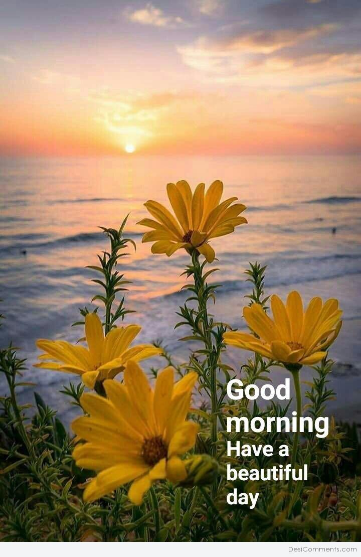 Good Morning Have A Beautiful Day Desicommentscom