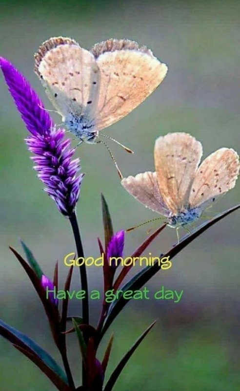 Image Of Good Morning - Have A Great Day