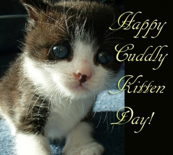 Happy Cuddly Kitten Day