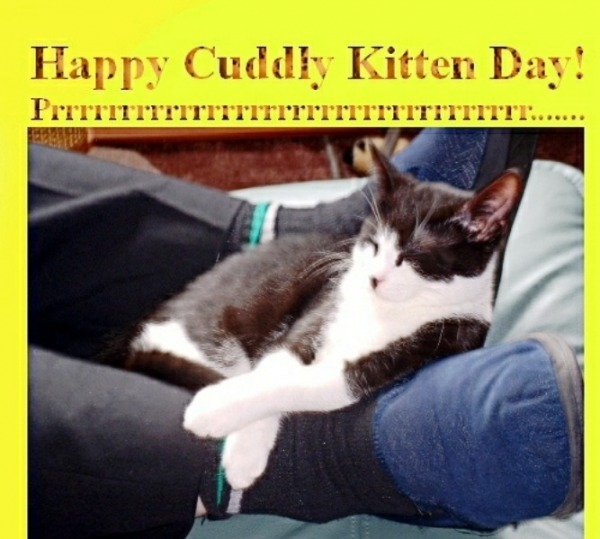 Happy Cuddly Kitten Day Image