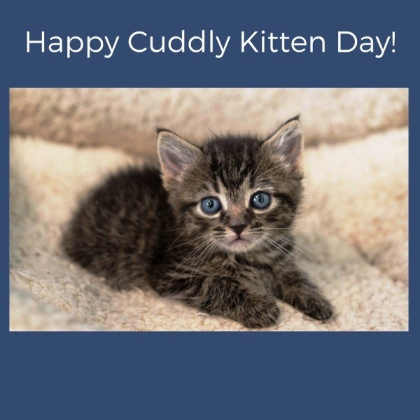 Happy Cuddly Kitten Day Photo