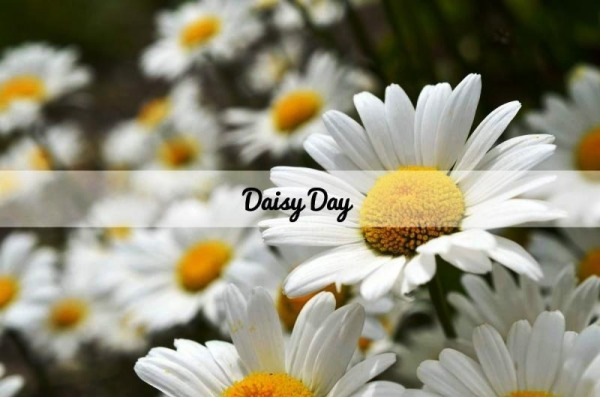 Picture: Daisy Day
