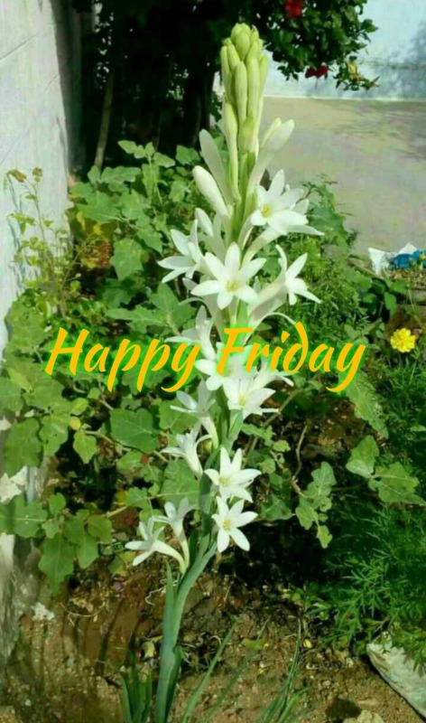 Picture: Happy Friday