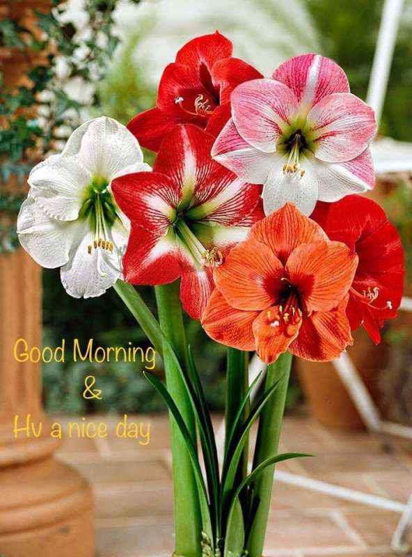 Good Morning And Have A Nice Day