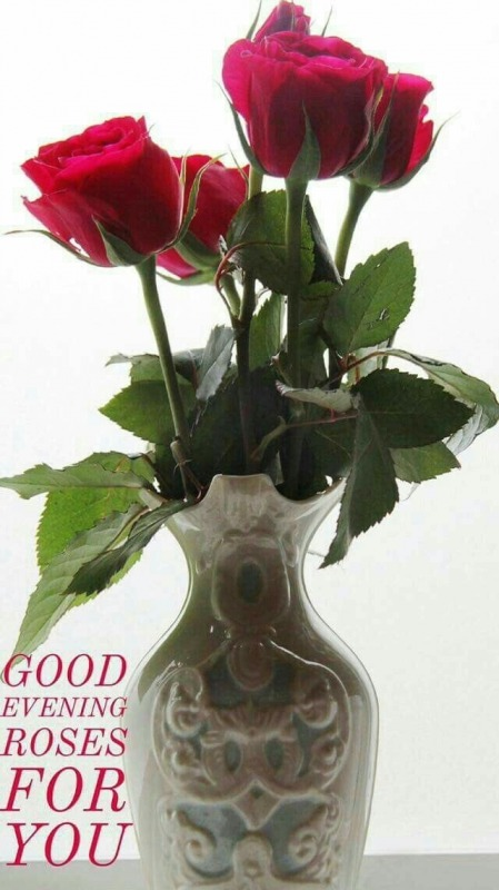 Good Evening Roses For You