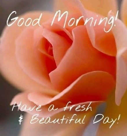 Have A Fresh And Beautiful Day