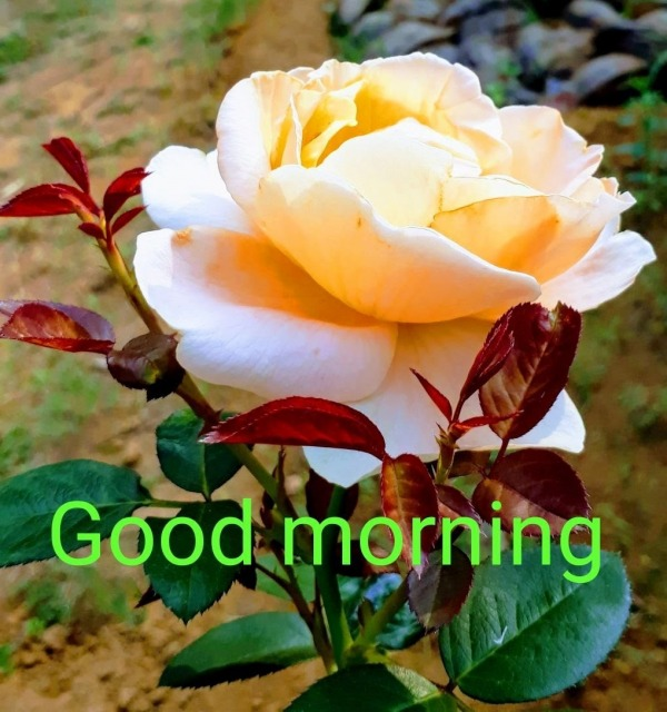 Good Morning With Beautiful Yellow Flower