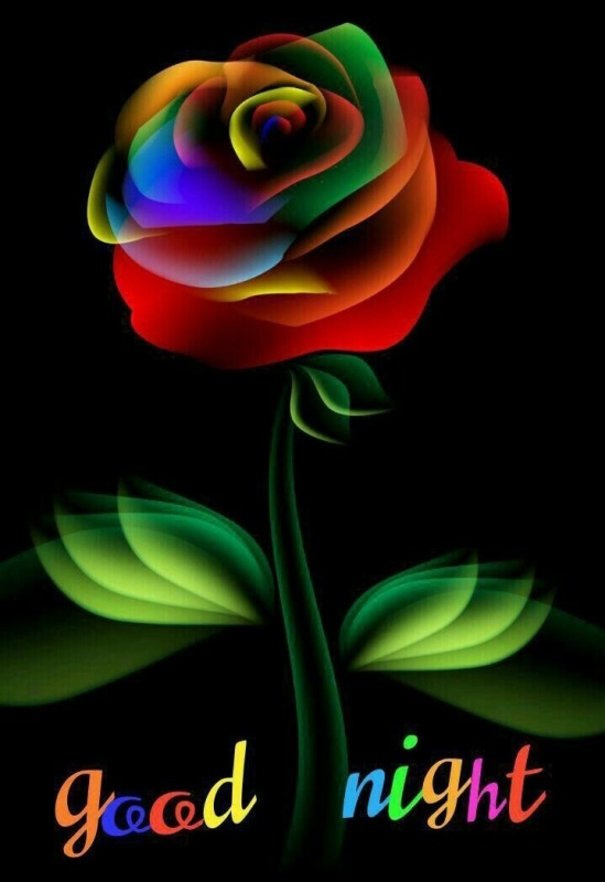 Picture: Good Night With Beautiful Rose