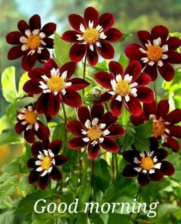Good Morning With Beautiful Flowers